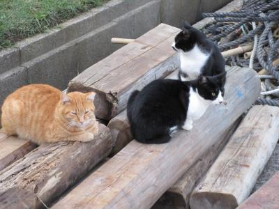 猫探し【秋田(象潟港の猫と紅葉の鳥海山・Cats in Kisakata port & Autumn color in Mt. Chokai)編】