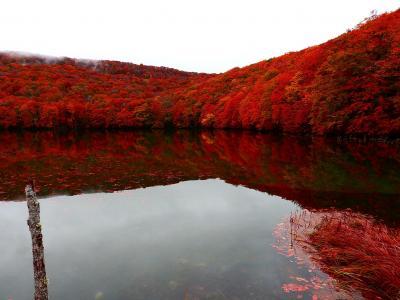 猫探し【青森・秋田(秋田~青森の紅葉・Autumn colors in Akita & Aomori)編】