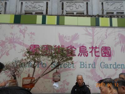 鳥ざんまい?雀鳥花園
