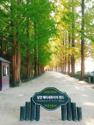 韓国全羅南道。秋の潭陽に行って来ました!
