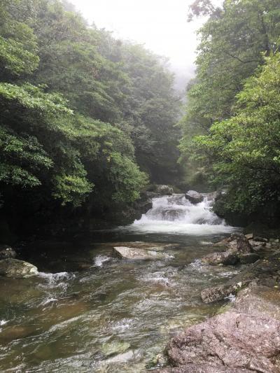 大阪&屋久島旅  4日目 白谷雲水峡♪から7日目