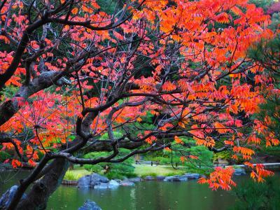 旧古河庭園の秋バラと紅葉
