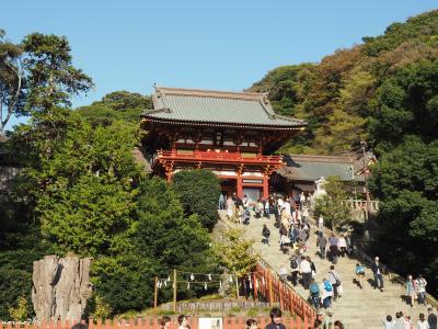 鎌倉の紅葉の見頃はもう少し先のようです