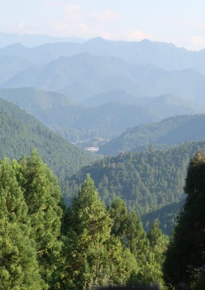 熊野古道-6 蘇生の森⇒伏拝王子跡⇒三軒茶屋分岐  ☆伏拝茶屋付近の好展望も