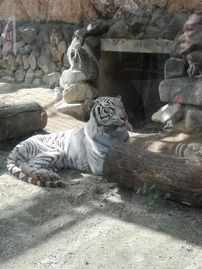 東武動物公園へ行きました。