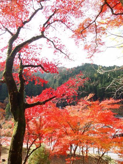 静かな静かな里の秋~