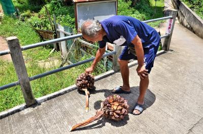 バンコク バンコクの肺「バーンガジャオ」でマングローブが生い茂る路地をサイクリングしてみた オッサンネコの一人旅