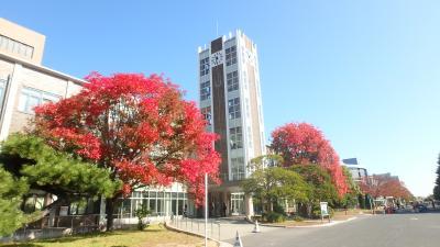 2017年版・岡山大学の紅葉(位置情報つき)