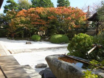 京都の紅葉 光明院から妙顕寺・鹿王院へ!2017年