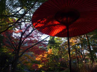 秋の京都散策~常寂光寺・二尊院・宝筐院・北野天満宮・仁和寺・祇園~