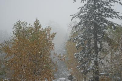 日本一早い紅葉に雪。冬が来てしまった旭岳温泉