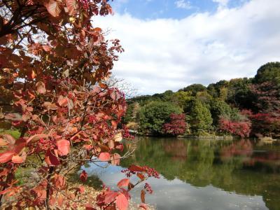 紅葉の薬師池公園