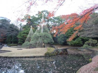 小石川後楽園の冬支度