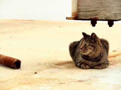 男木島でネコちゃんと戯れる