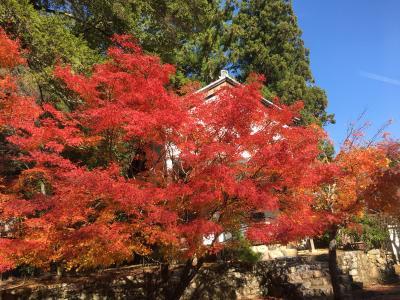 2017年 秋の京都 紅葉さんぽ 三尾めぐり