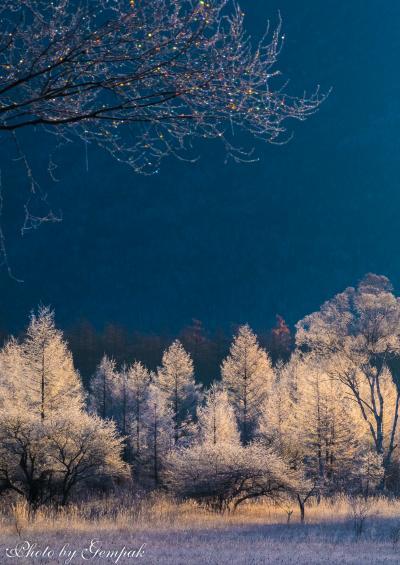 初冬の奥日光、小田代ケ原 ~霧氷に覆われた白銀の世界~