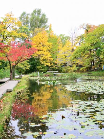 北海道大学構内で札幌の秋を感じる1日♪