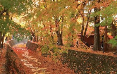 お気楽バスツアーで山梨の秋を満喫(後編)ぶどう狩りと河口湖もみじ回廊&富士山絶景