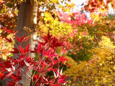 川口安行ちょこっと散歩―秋の御朱印@九重神社・紅葉の小林もみじ園・興禅院の抱かれ地蔵