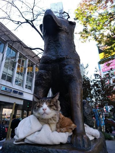 渋谷にもあの猫が・・・('_') 外苑前イチョウ並木が見頃