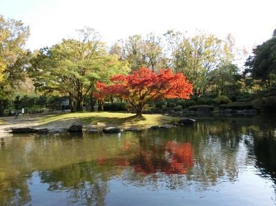 晩秋の大阪万博記念公園・自然文化園をの~んびり紅葉散歩。(2017)