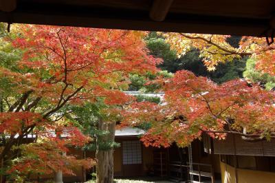 一条恵観山荘-庭園一般公開