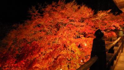 2017年11月17日現在・播州清水寺で紅葉ライトアップ