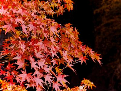 11月上旬の紅葉、奥秩父にある中津川渓谷へ