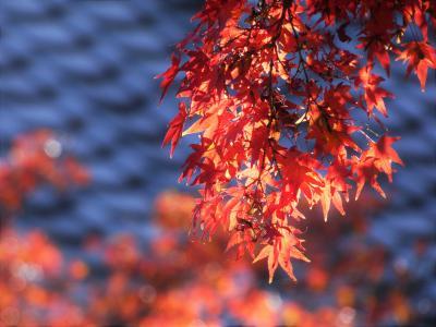 晩秋の清水公園。