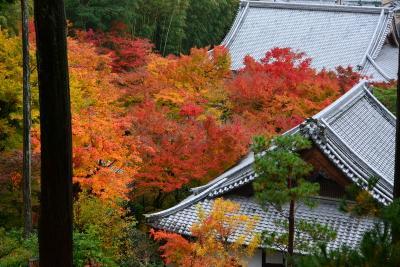 京都の紅葉 通天橋・光明院から圓光寺と詩仙堂へ!2017年