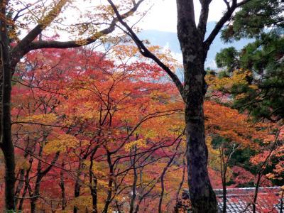 本日の箱根仙石原 長安寺の紅葉 2017年11月19日