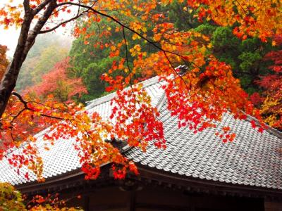 紅葉の日吉大社と永源寺・百済寺へ