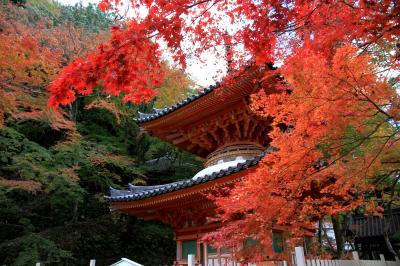 牛滝山 大威徳寺の紅葉 見頃です。