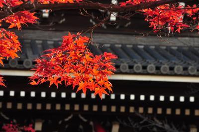 京都の秋散歩 金戒光明寺