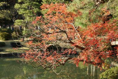 20171119-2 駒込 六義園で、色づき始めの紅葉。ちうか、主役はハゼノキでしたかな?