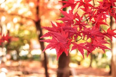国営公園散策日記⑤~秋色の国営武蔵丘陵森林公園~