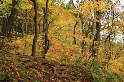 紅葉とクラゲに会いに秋の東北へ (3)またまた黄金色の森 高瀬峡でのハイキング
