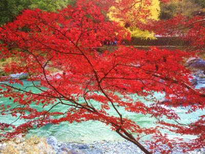 奥多摩御岳、杉並木参道と御岳渓谷紅葉の様子をスマートフォンで