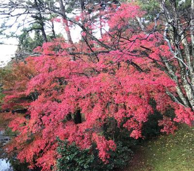 石川県山中温泉を堪能する(1)