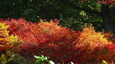 紅葉を求めて六甲山へ 神戸市立森林植物園 上巻。