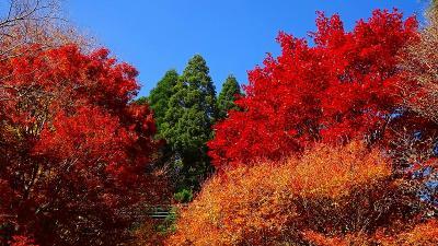紅葉を求めて六甲山へ 六甲高山植物園 上巻。