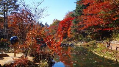 紅葉を求めて六甲山へ 六甲高山植物園 下巻。