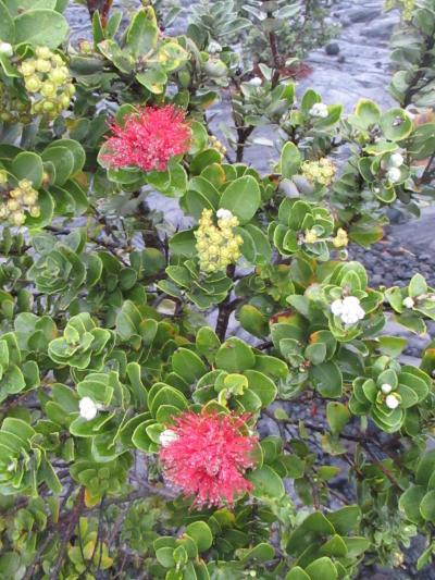 トレッキングは雨天中止!一日中雨降り@ハワイ島だけ8泊9日(4)