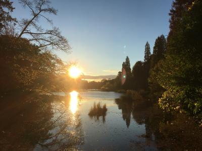 早朝ランニング~井の頭公園