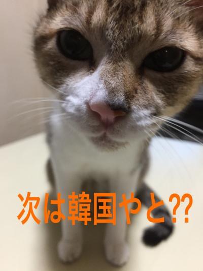 浦項・釜山グルメ旅