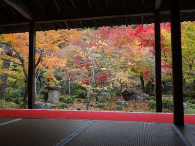 「一乗寺・蹴上」超絶景!秋の京都紅葉巡り
