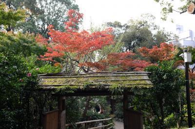 紅葉の目白台、日本庭園めぐり