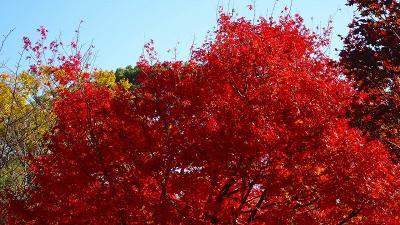 青空に誘われ、池田城址公園へ紅葉を探しに行きました 上巻。