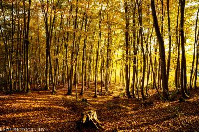 やっと出会えた「美人林の紅葉」