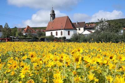 ドイツ・ワイン街道☆ワイン祭り in マスカットの村グライスツェレン 秋の風物詩ドイツ・スイスの旅2-2